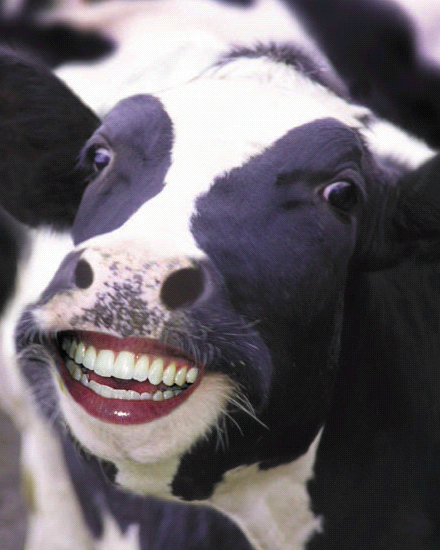 happy_cow_large1